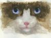 cat.w.c. copy