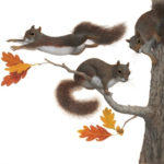 Squirrels / The Busy Tree book art
